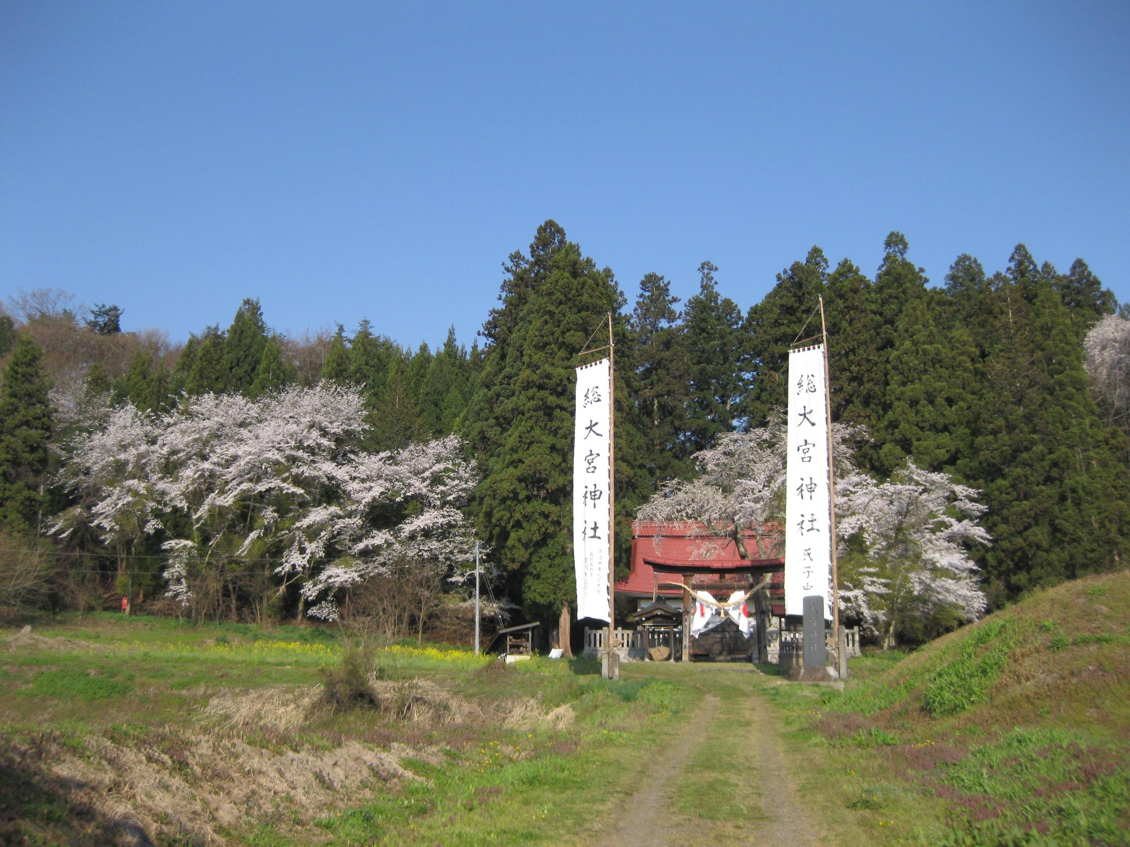 黒川「桜林のエドヒガン」