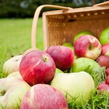 りんごかご1.14M