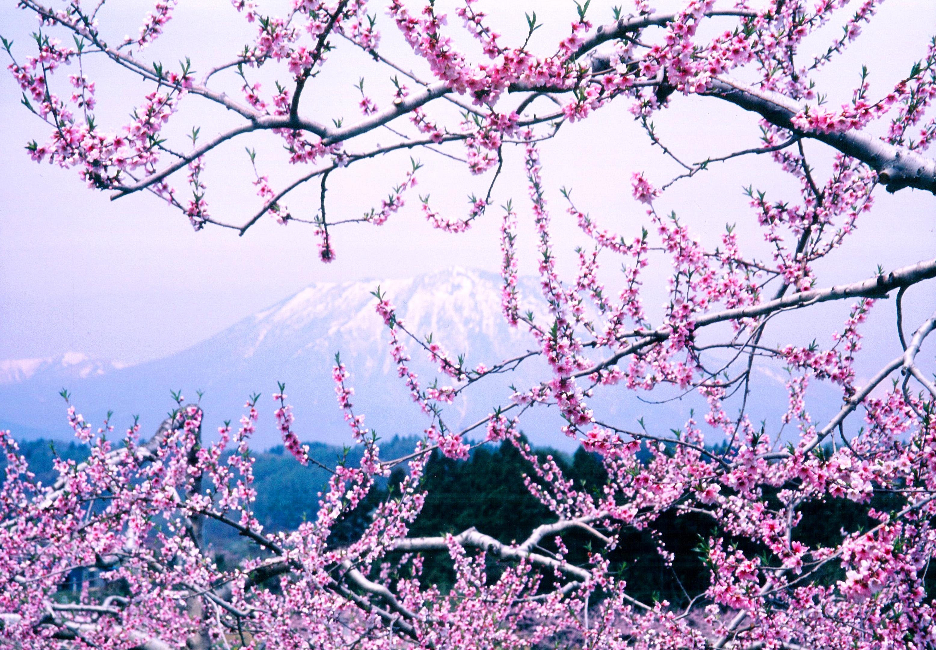 いいづなまち「花まつり」