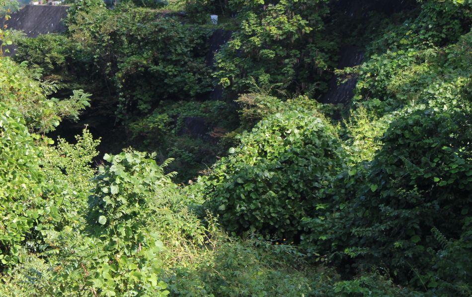 18鳥居川(とりいがわ)の道倫淵(どうりんぶち)