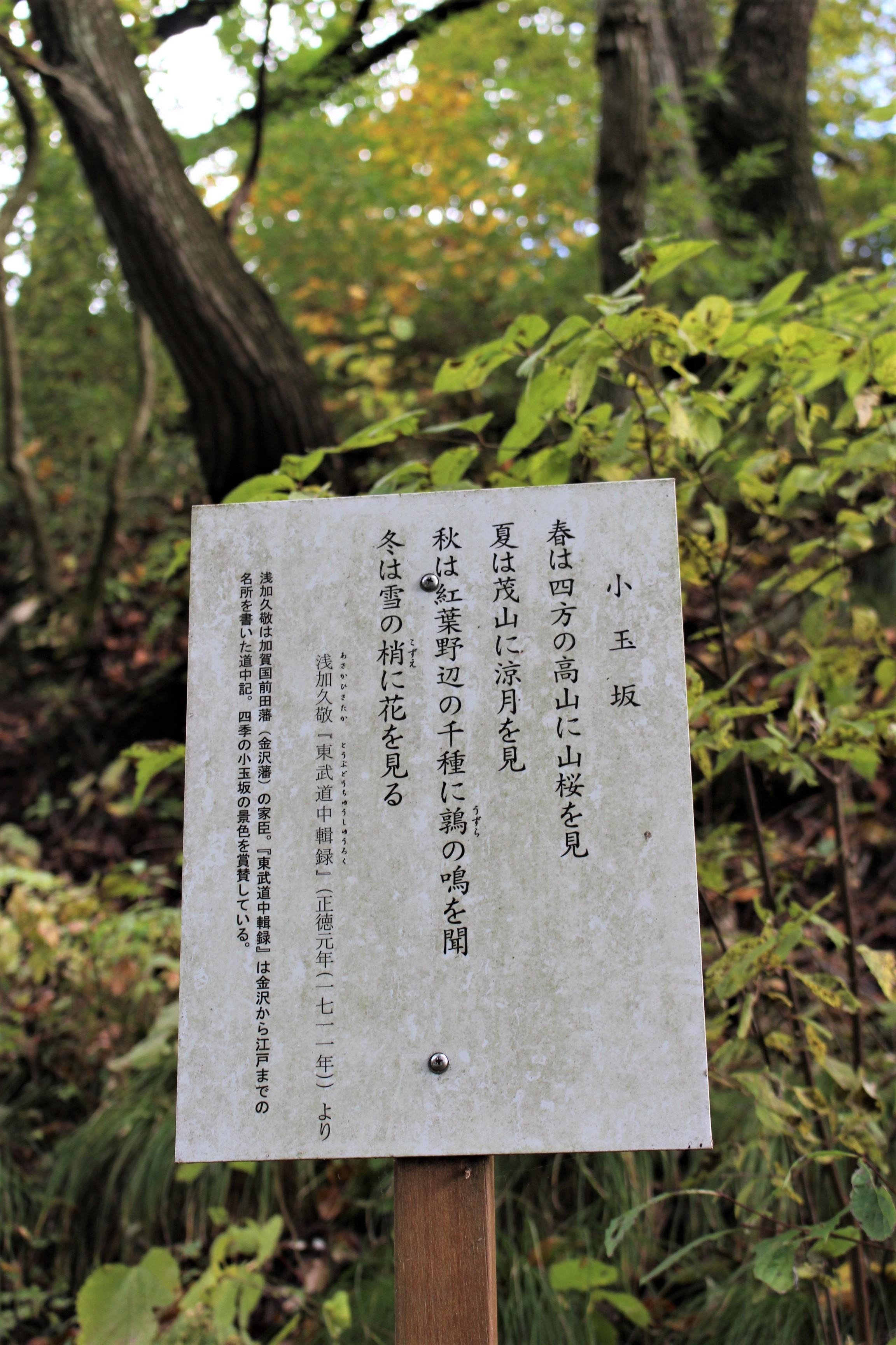 7小玉坂(こだまざか)