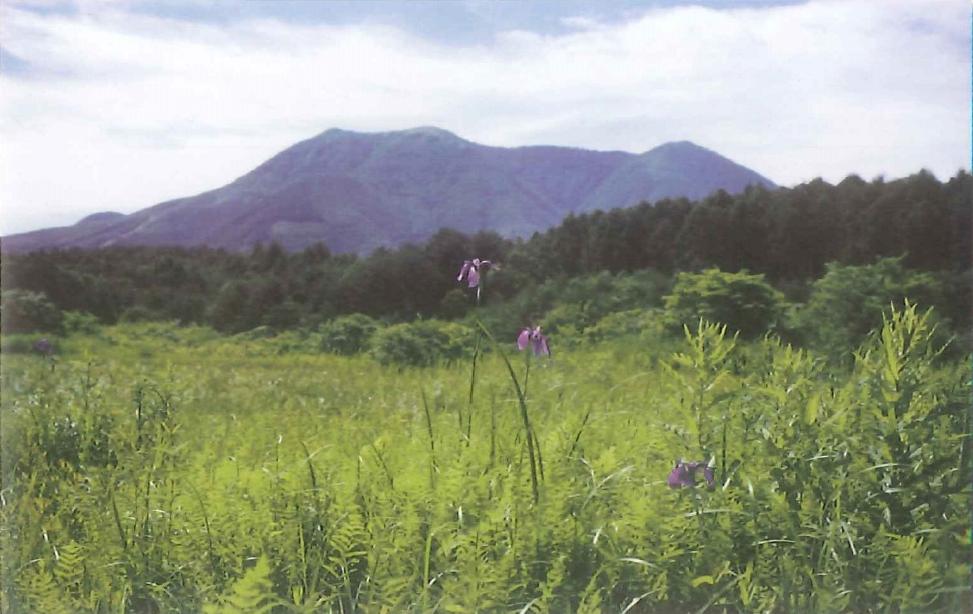 「逆谷地湿原」10万年の歴史を秘めた小さな湿原