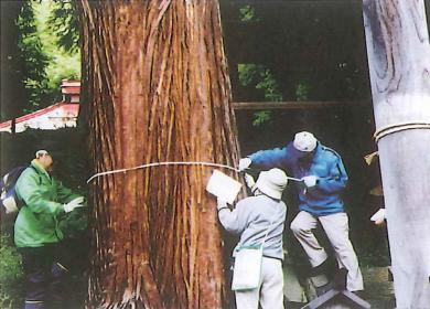 「平出から番匠地区」巨木をたずねて